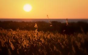 Картинка солнце, закат, горизонт, sunshine, sunset, horizon, plant stalks, стебли растений