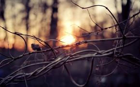 Картинка осень, лес, солнце, макро, деревья, закат, ветки, ветви