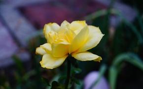 Картинка цветок, макро, цветы, жёлтый