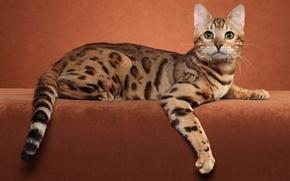 Картинка животные, кот, котенок, фото