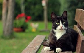 Картинка кошка, кот, взгляд, скамейка, черно-белый