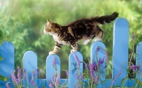 Обои забор, зеленый, Кошак