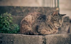 Обои кошка, дремлет, отдыхает, ступеньки, спит, кот