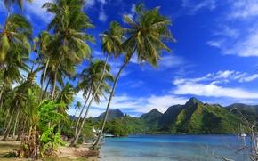 Картинка горы, тропики, пальмы, океан, побережье, Pacific Ocean, French Polynesia, Тихий океан, Французская Полинезия, Moorea Island, …