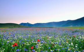 Картинка поле, небо, цветы, горы, маки, ромашки, долина, разнотравие