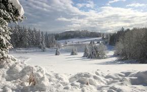 Картинка лед, снег, озеро, Зима, ели
