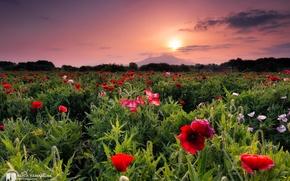 Картинка закат, цветы, красота, photographer, Kenji Yamamura