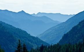 Картинка деревья, пейзаж, горы