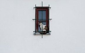 Картинка кошка, окно, решётка