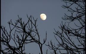 Картинка небо, ветви, Луна, moon, силует, sky, nature