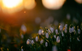 Картинка блики, весна, подснежники