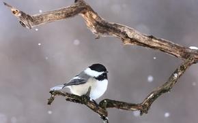 Картинка снег, птица, ветка, bird, branch, snowing