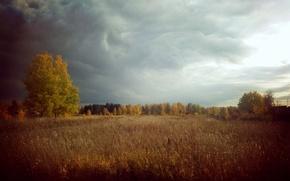 Картинка лес, природа, гром