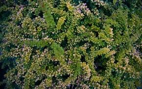 Картинка лето, зеленый, растение, агрокультура