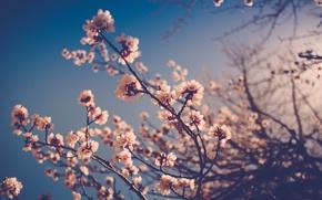 Картинка цветы, ветки, стебли, бутоны, боке