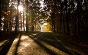 Обои осень, лес, forest, германия, Autumn, germany