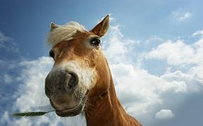 Картинка животные, трава, глаза, конь, лошадь, кони, лошади, колоски, пастбище, колосья, animals, колосок