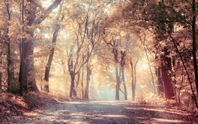 Картинка дорога, листья, пейзаж, природа, туман, forest, леса, landscape, nature, красивые, beautiful, солнечные лучи, scenic, fog, …