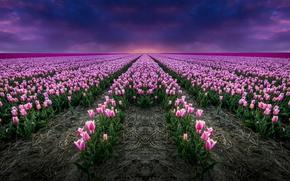 Картинка поле, горизонт, тюльпаны, Нидерланды, Голландия
