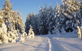 Картинка лес, снег, Зима