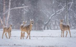 Картинка winter, deer, wildlife, family, snowing