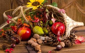 Картинка яблоки, колосья, орехи, шишки, груши, каштаны