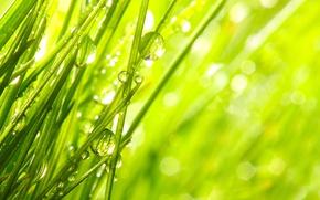 Картинка трава, капли, макро, природа, роса, утро, nature, macro, morning, the grass, the dew drops