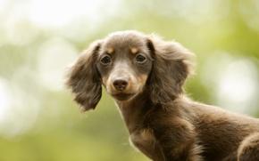 Картинка друг, красота, собака