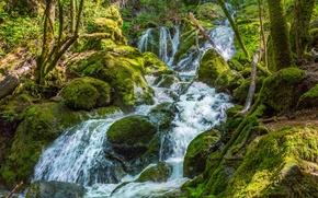 Картинка зелень, лес, ручей, камни, водопад, мох