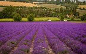 Картинка цветы, поля, трактор, дом, поле, деревья, лаванда