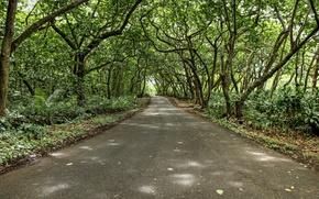 Картинка дорога, деревья, ветви