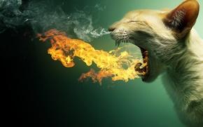 Обои кошка, кот, зубы, пасть, пылает, дым. пар, огонь