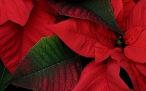 Обои листья, природа, краски, растение, цвет