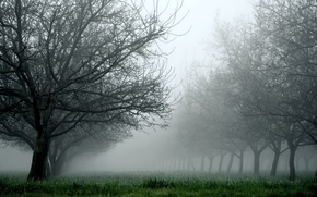 Картинка трава, деревья, природа, туман
