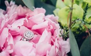 Картинка камни, лепестки, кольцо, пион