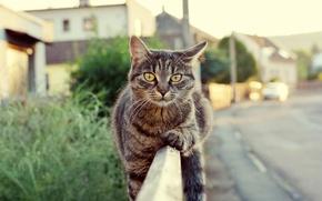 Картинка дорога, взгляд, забор, шерсть, Кот