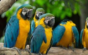 Картинка отдых, группа, окрас, попугаи