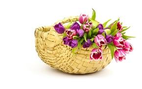 Обои тюльпаны, бутоны, корзина