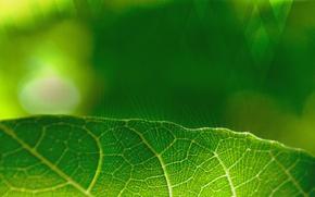 Картинка green, nature, art, beautiful