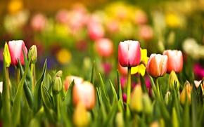 Картинка зелень, лес, лето, трава, листья, макро, цветы, свежесть, желтый, красный, природа, зеленый, парк, настроение, тишина, ...