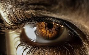 Картинка eye, pupil, iris, eyelash