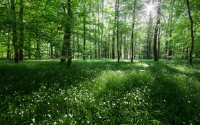 Картинка лес, свет, деревья, цветы, природа