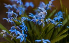 Картинка макро, Цветы, весна