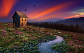 Обои пейзаж, кочки, природа, дом, вода, птицы