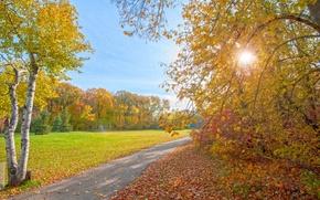 Картинка осень, лучи, свет, деревья, парк, дорожка
