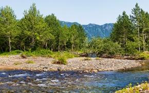 Картинка деревья, горы, ручей, камни, Россия, Камчатка, Kamchatka