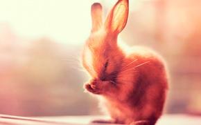 Картинка лапки, кролик, ушки
