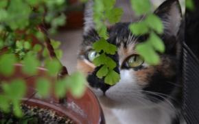 Картинка кошка, джунгли, трёхцветная, жопульдра