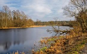 Картинка деревья, озеро, Осень, trees, nature, autumn, lake, fall