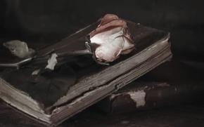 Картинка фон, роза, книги